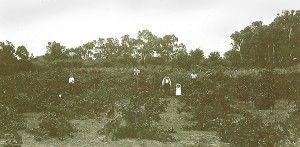 The oldest family vineyard