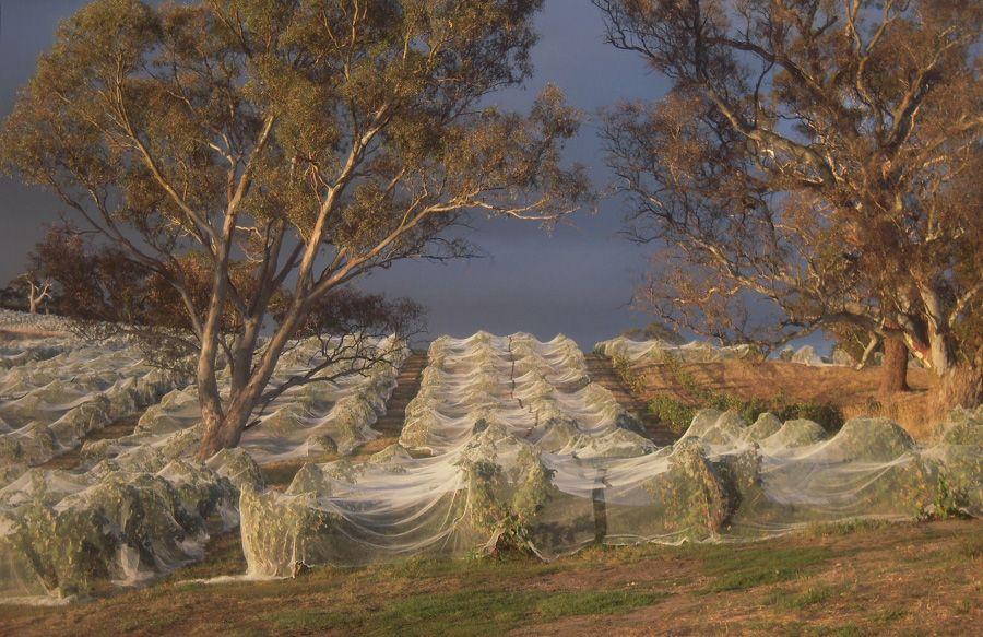 Barr Eden vineyard.