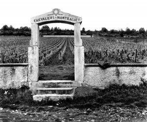 The famous 'Chevalier-Montrachet' vineyard  in the Côte de Beaune subregion of Burgundy.  Photo : Milton Wordley