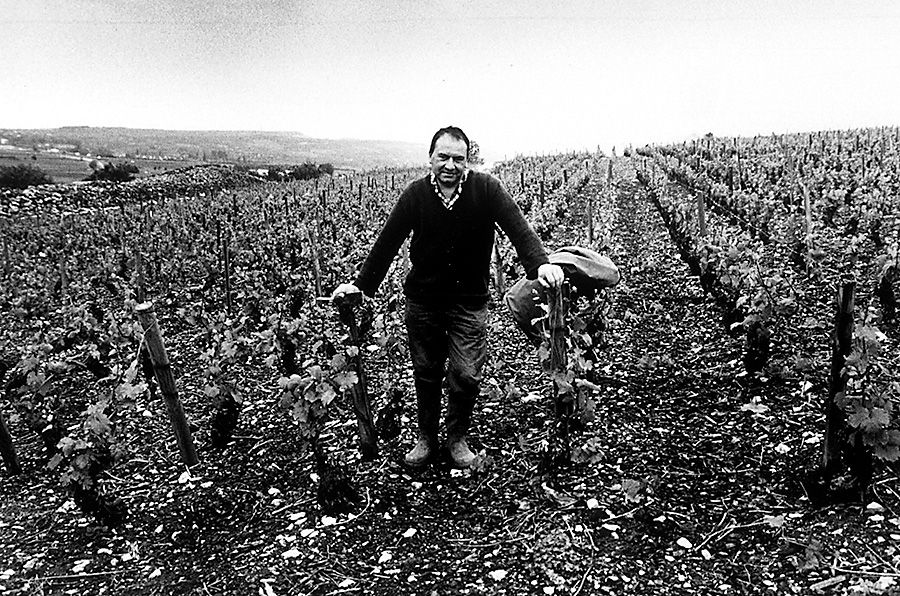 French vineyard worker in Beaune. Photo Milton : Wordley.