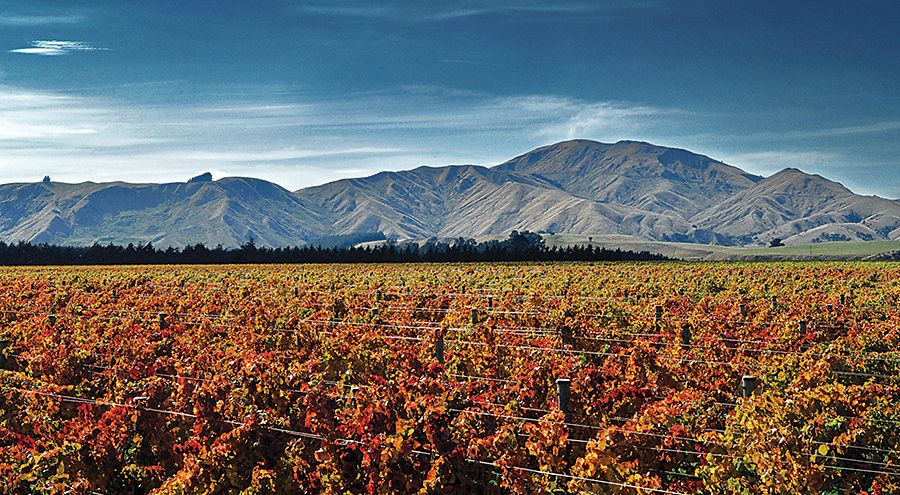 Escarpment Vineyard Te Muna Road Martinborough  : Photo © Mike Haydon.