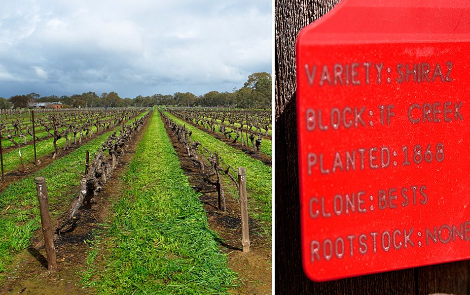 Best's Victorian vineyard Shiraz. Photo : Milton©Wordley.