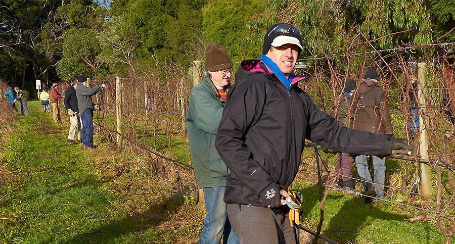 The day the local vignerons pruned Eldridge  : Photo © Eldridge Estate.