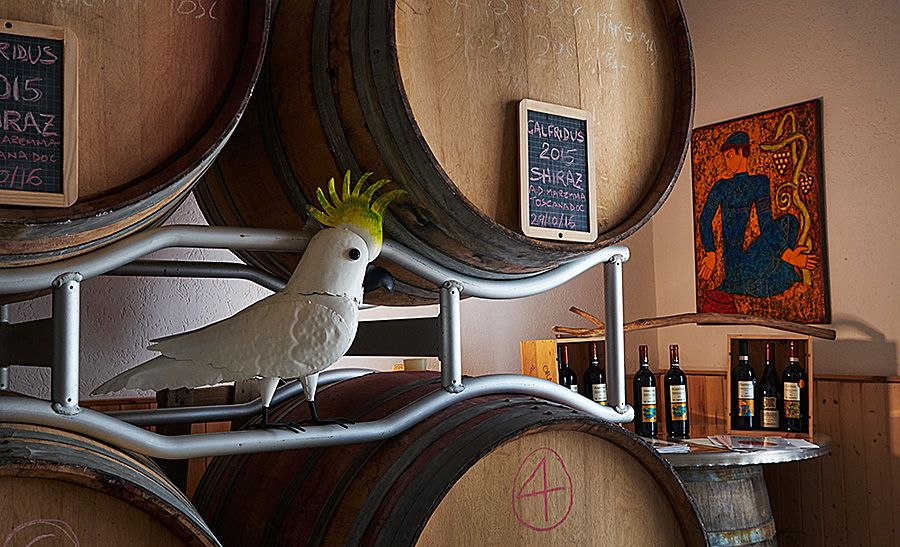 A touch of Australia in the winery, a Sulphur-crested Cockatoo : Photo © Milton Wordley.