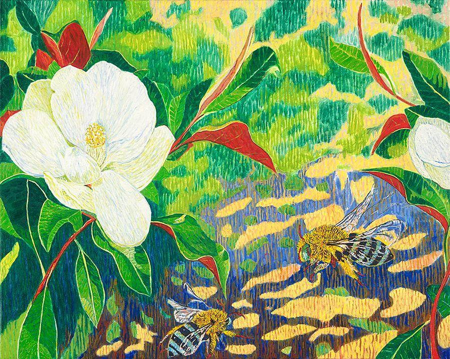 Australian native bees and camelias  : Painting © Andrew Caillard